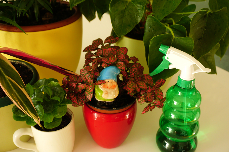 How to Get Rid of Bugs on Houseplants