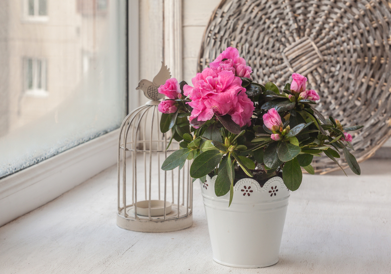 How to Take Care of an Azalea Plant