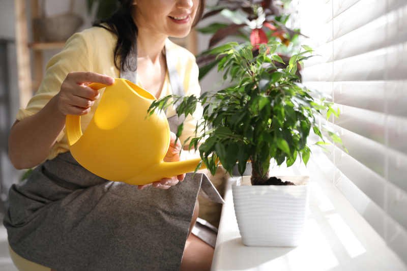 Should Houseplants Be Watered from the Top or Bottom