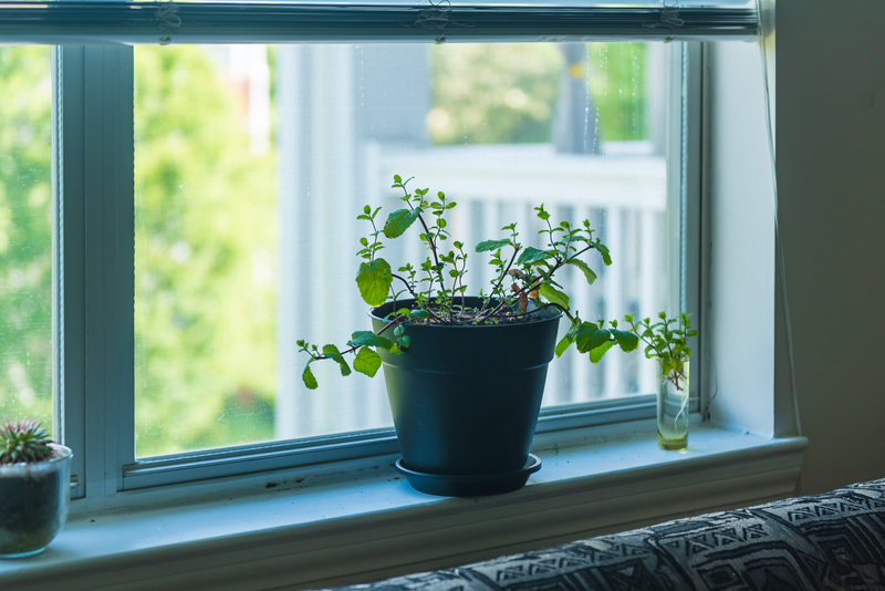 how to take care of a mint plant