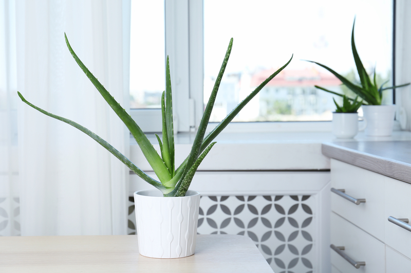how to take care of an aloe plant
