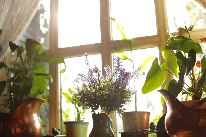 should houseplants be in direct sunlight