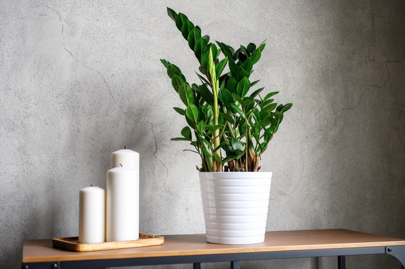 what are good house plants for low light