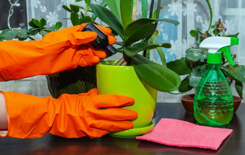 How Often Should Houseplants Be Fertilized