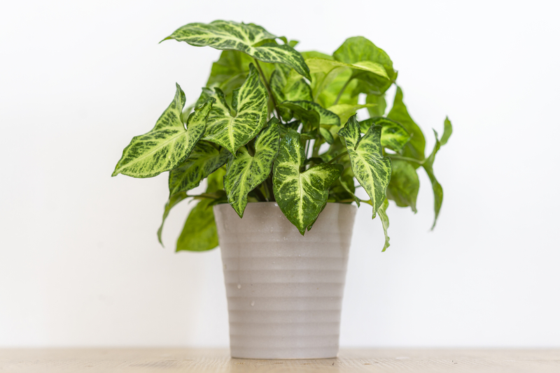 How to Take Care of an Arrowhead Plant