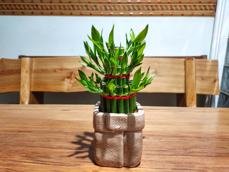 how to take care of a bamboo plant