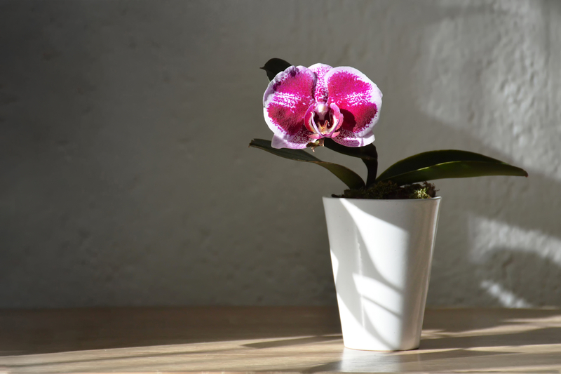 how to take care of an orchid plant